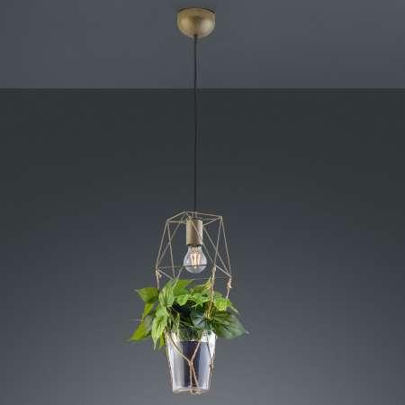 Trio Lighting Závesná lampa Plant, 1-pl. sklenená vložka na deko
